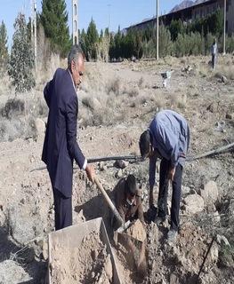 کاشت تعدادی اصله نهال زیتون در هفته منابع طبیعی در زمین های مجتمع